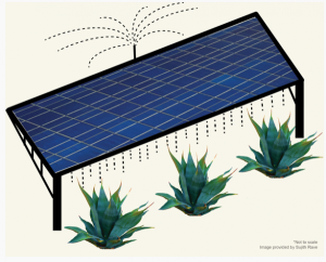 solar-panels-crops-use-same-water-source